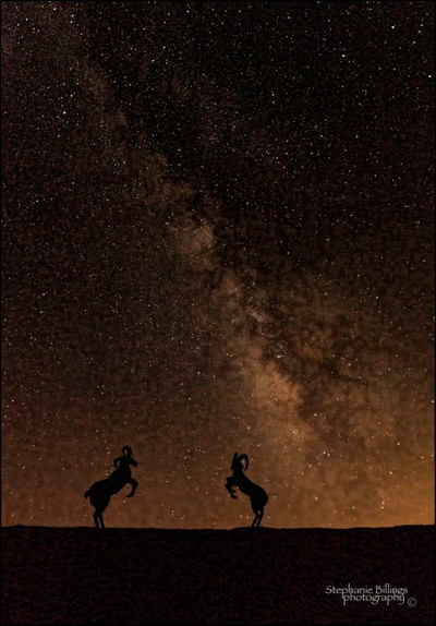 two sheeps & the milky way