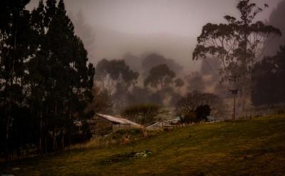 Misty day in Dunedin