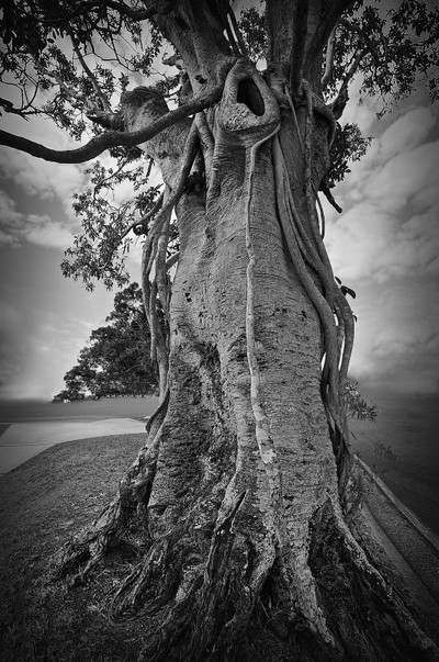 the howling tree
