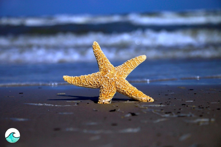 A starfish sits in the beach.