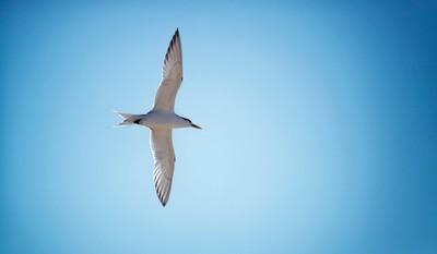 Stockton Beach Bird