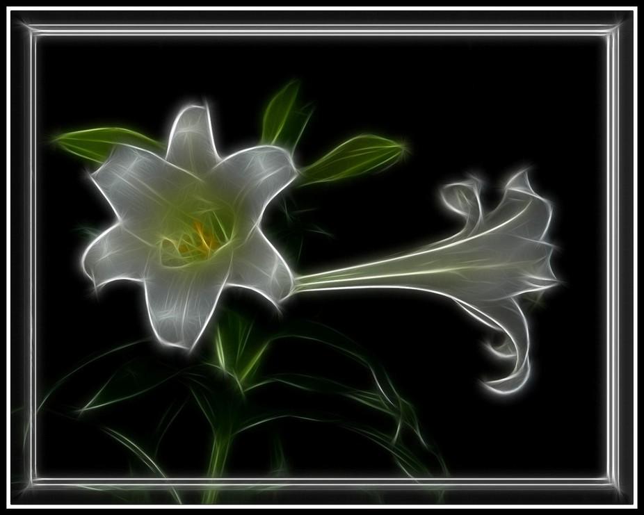 White Lily 016 Fractal