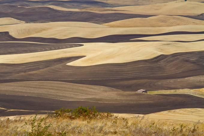 Palouse WA 4810 by heatherwoodfarm - Dry Fields Photo Contest