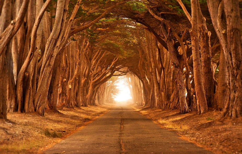 Cypress Tree tunnel taken near Point Reyes Lighthouse in Northern California