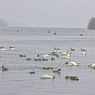 This photo was taken in the year 2012, when we visited the Lake District in the UK. This is a picture from the Windermere Lake.