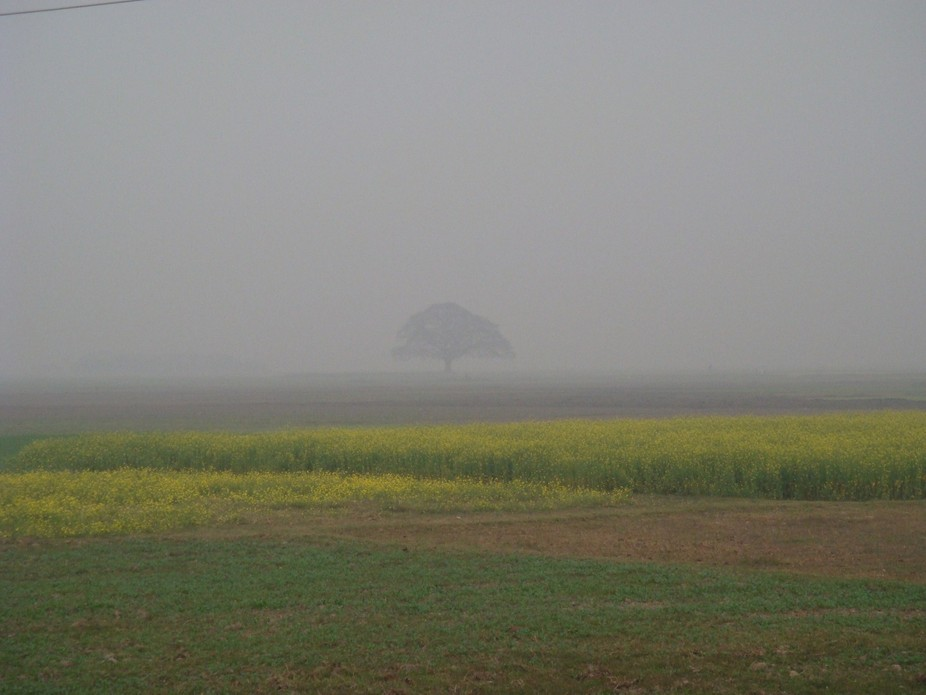 I was visiting my home village in winter. In the fog that large tree was the mark of my destinati...