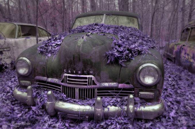 Violet Death  by IMIKEMEDIA - Shades Of Purple Project