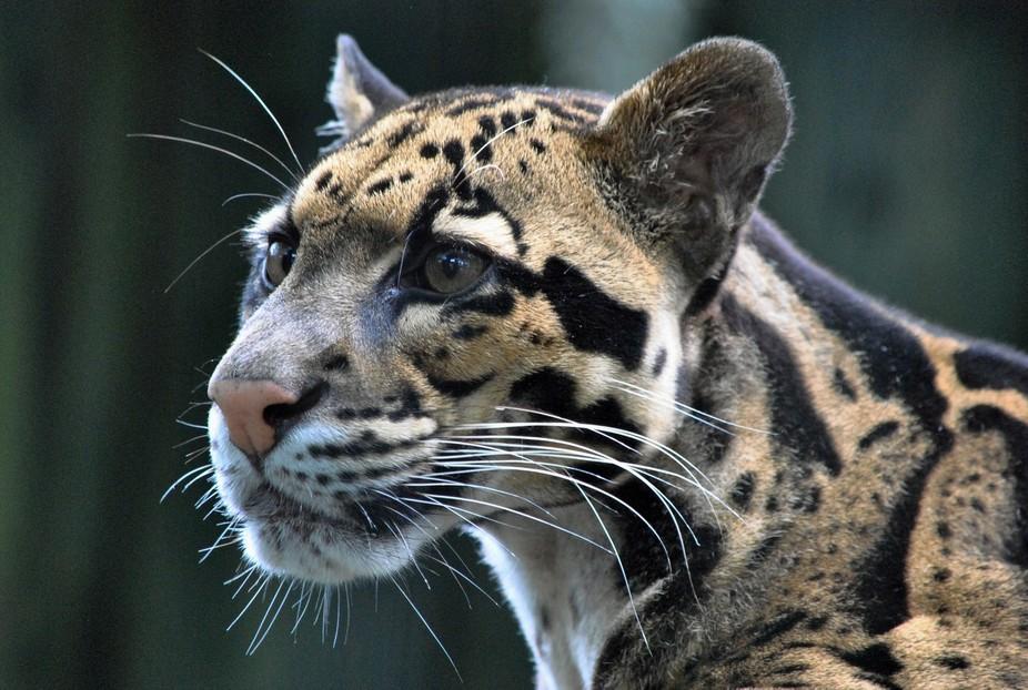Lowry Zoo_6979