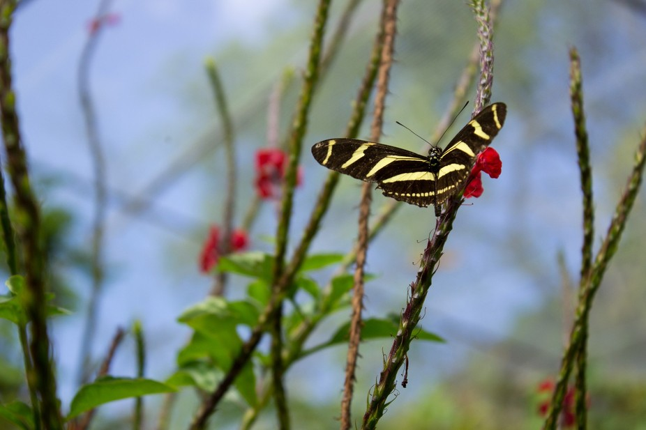 Was in Mexico with some friends and one of the tourist attractions we visited had a butterfly san...