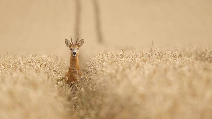 Hi! by bridgephotography - Lost In The Field Photo Contest