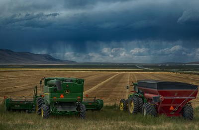 The crop is in nothing to do but watch the storm