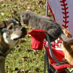 Doggies and kitties can live lovingly in the same home