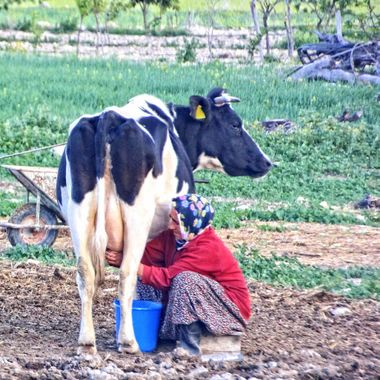 This photo was taken in the year 2014, at Büyükkonuk village, Cyprus. I went there with my students as part of a photography trip. We spotted this woman milking a cow and I thought it would make a nice composition.