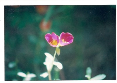 Scan_Pic0011