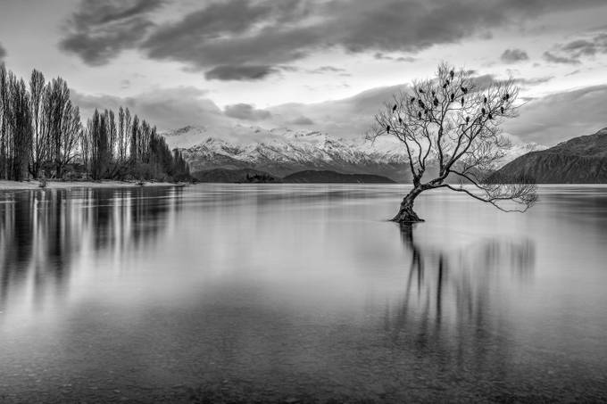 The Wanaka Tree by jacobmarsh - Black And White Landscapes Photo Contest