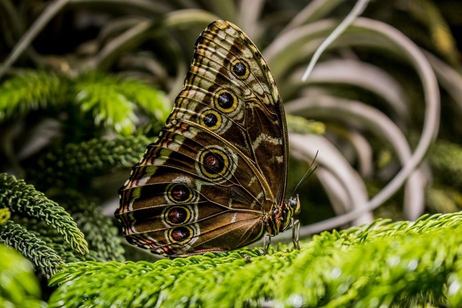 Proud Butterfly