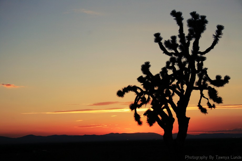 This is a beautiful shot i got in the high desert. The sun sets of southern ca are so different t...