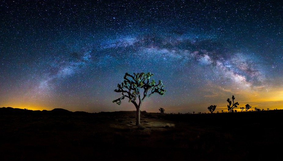 Milky way rising over the Joshua Tree in Joshua Tree National Park
