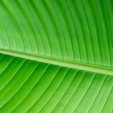 Palm Leaf Macro