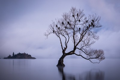 Birds of Lake Wanaka