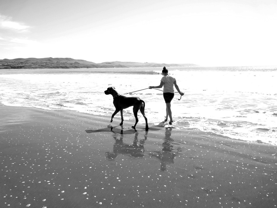 Great Dane walking with his owner on the bodega Coast