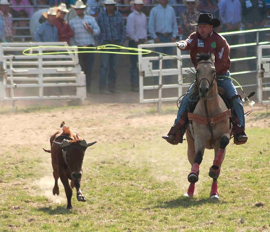 Team Roping at its finest at Pendleton Round Up