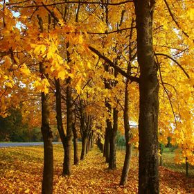 Are You waiting for golden autumn ...