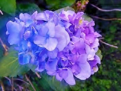 Nice Blue flower on bush
