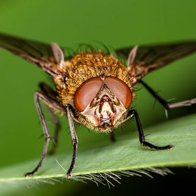 General fly close up