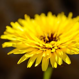 Yellow petals glowing under sunlight