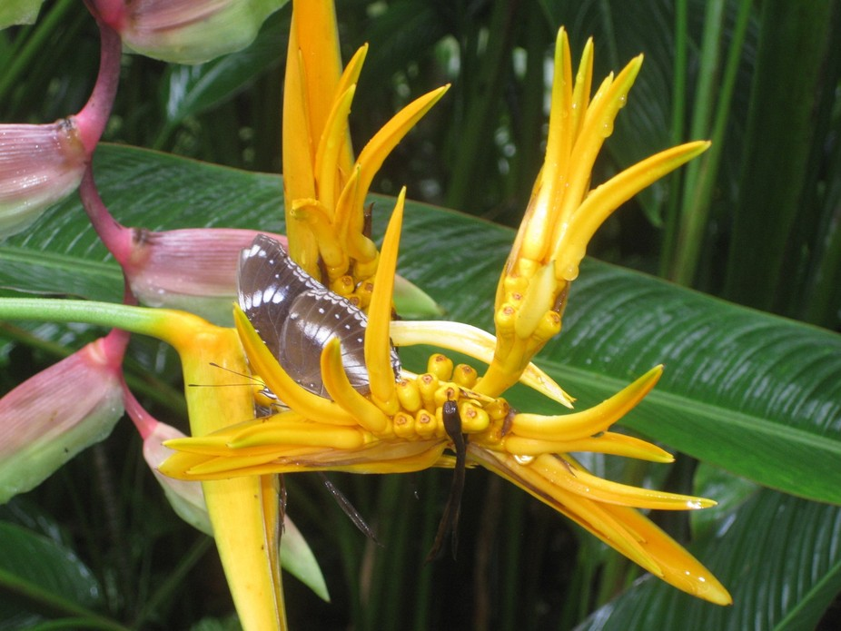 I took this photo in 2011 on a visit at the Penang Butterfly Farm