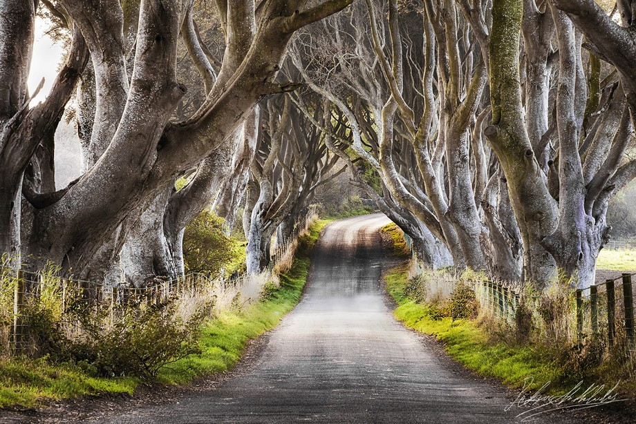 The Dark Hedges, Co Antrim, Ireland