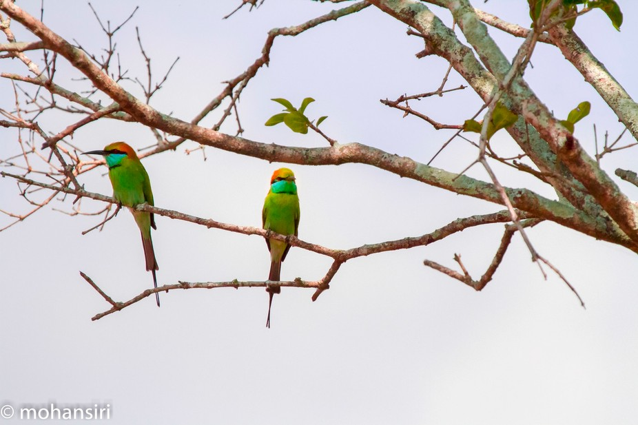 Shot in the afternoon in North Central Province of Sri Lanka