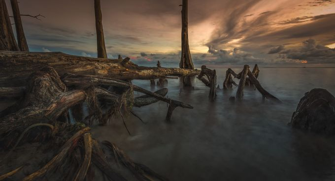Cypress-beach by phillip_brossette - Fallen Trees Photo Contest