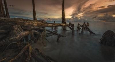 Cypress-beach