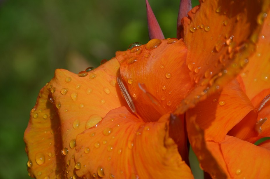 Water Drops of Orange