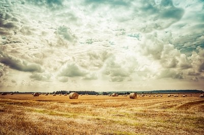 Harvest Day by Andreas Voigt Photography