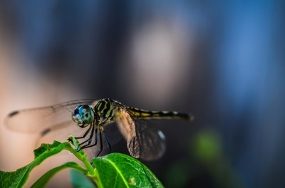 A dragonflies smile