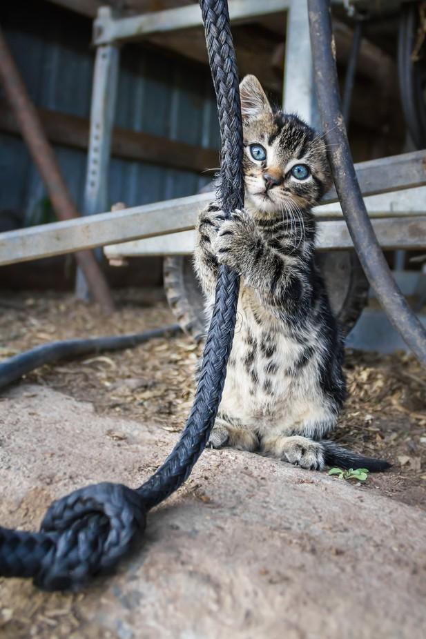 Barnyard Cuteness by SammyG - Cute Kittens Photo Contest