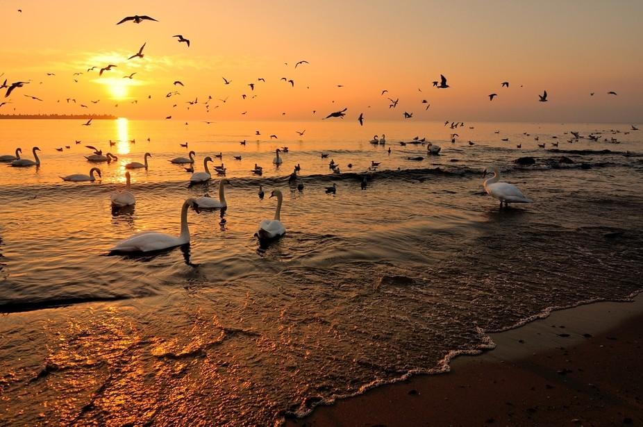 birds&sunrise