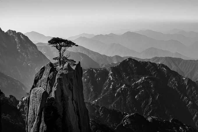 Alone on the mountain by clifffawcett - Tree Silhouettes Photo Contest