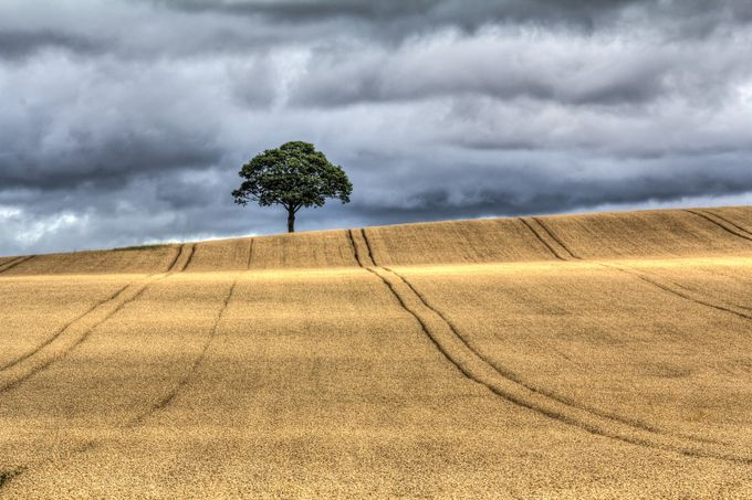 Lonely Tree by jaybirmingham - Farming Photo Contest