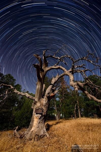 Ancient Tree Among the Stars