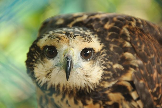 Here's looking at you kid. by Kaceoo - Just Eagles Photo Contest