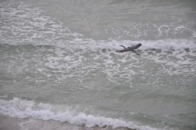 Free Flight Heron