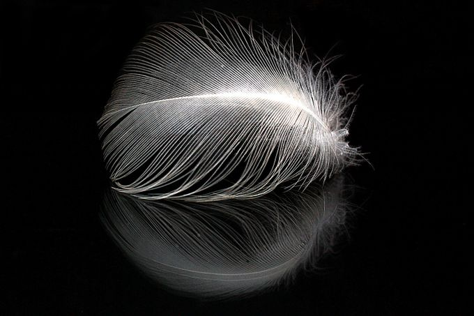 Seagull Feather And Reflection by phillecren - Stillness Photo Contest