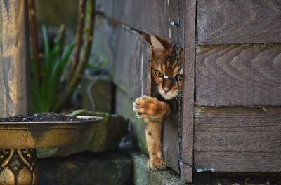 Kitties den