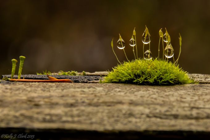 Dew-Laden Moss by Ceallach - Close Up Art Photo Contest