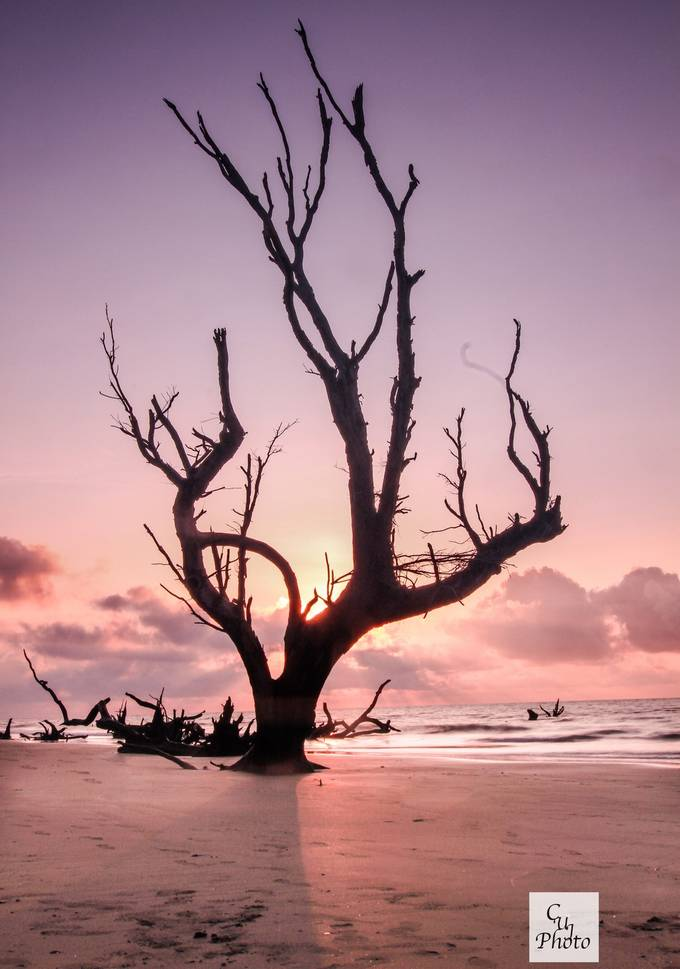 This was taken on Bull's Island, SC. The trees or boneyard have such great shapes and lines.