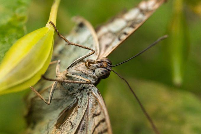 The butterfly nap by alexandresurel - Macro Butterflies Photo Contest